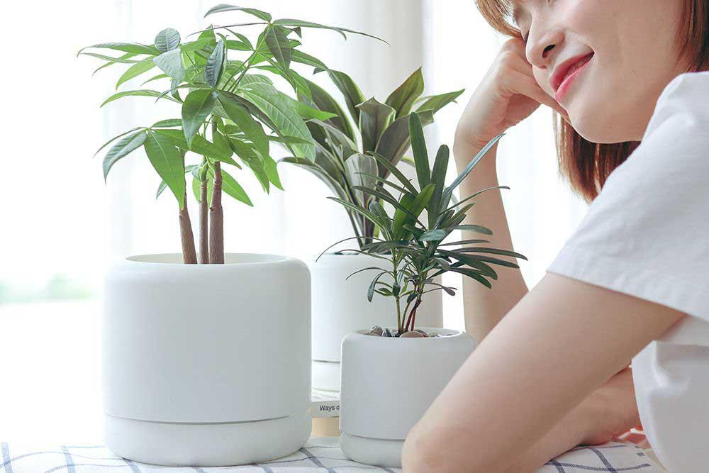 melloy 水培植物盆:植物殺手的恩物!