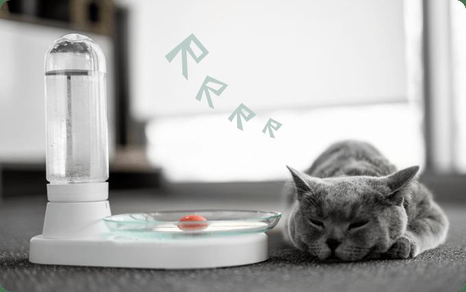 KittySpring 天然貓咪飲水器